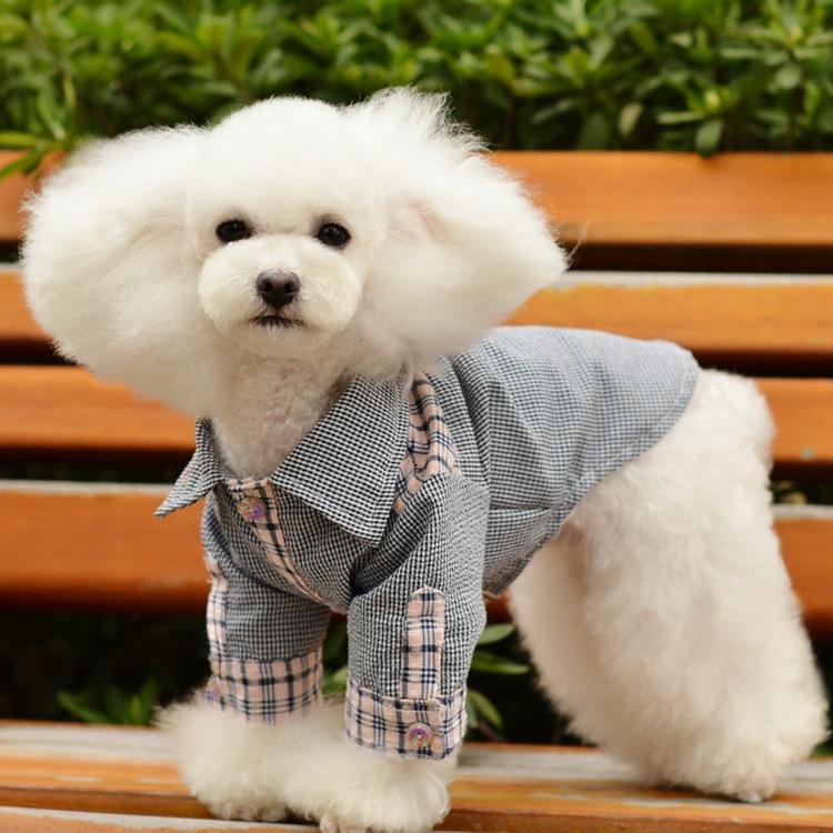 PET FASHION: Anul acesta se poartă jeans-ul prespalat și salopetele cu imprimeuri