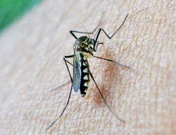 Cum te protejezi de țânțari