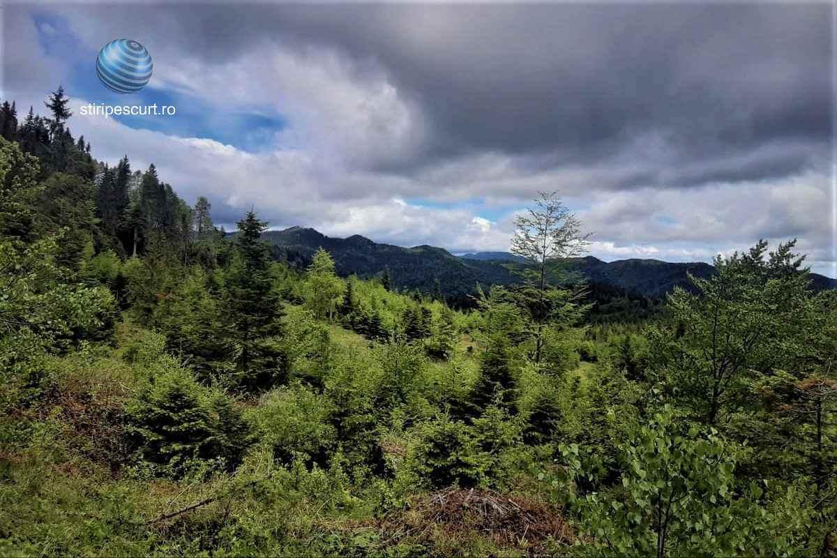 """Un mic pas pentru potejarea """"aurului verde"""" românesc: Pedepse noi pentru hoții lemne, într-o lege adoptată de Senat"""