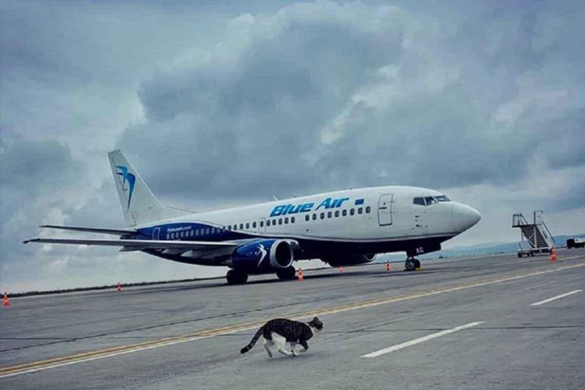 Blue Air reia zborurile către multe dintre destinațiile preferate de români