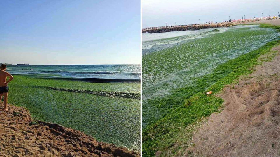 Mareea Verde atacă plajele din stațiunile de pe Litoral - turiștii înspăimântați ce câte alge au venit la mal