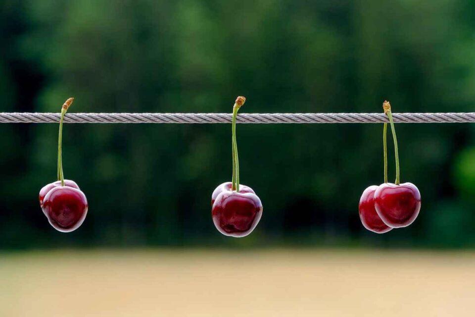 Cireșele nu se mai coc pe strada asta… Opinie de Gabriela Ibens, Antewrp