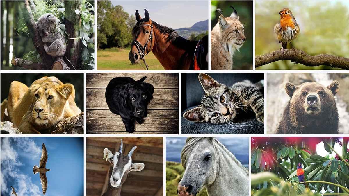 4 octombrie - Azi este Ziua internaţională a animalelor. Premieră în România