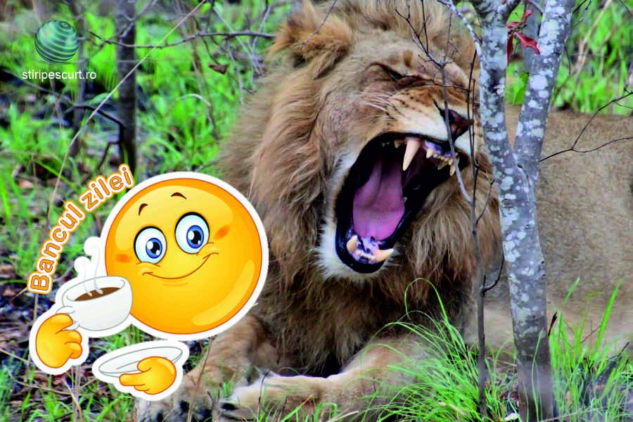 Bancul Zilei » Azi, despre lei