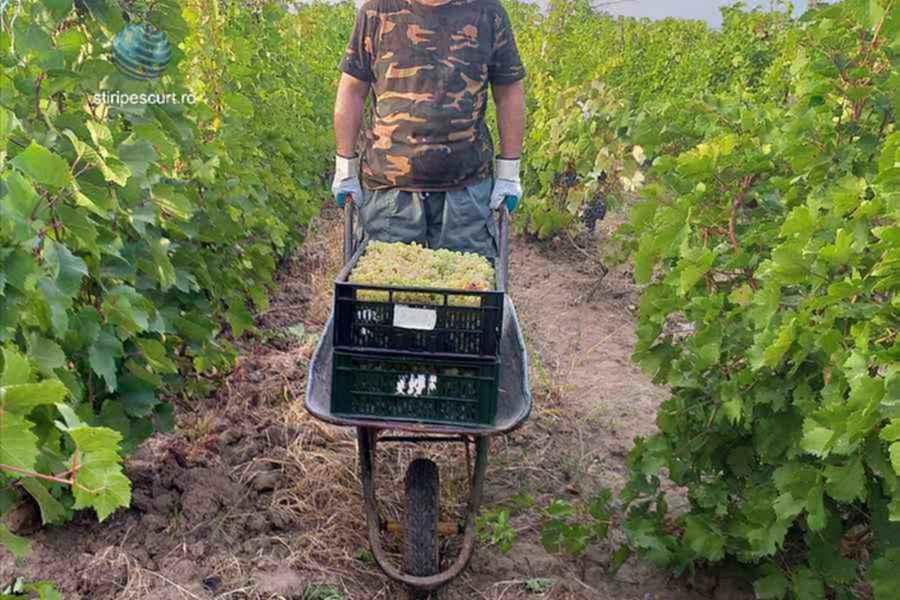 """Ajutor de stat pentru producătorii din domeniul viticol şi lansează programul """"Agro Invest"""" pentru fermieri"""