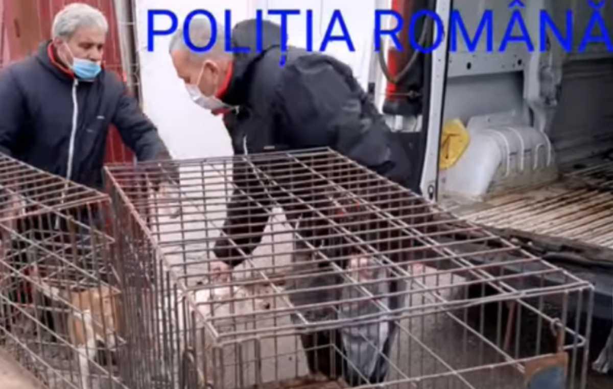 Terifiant! Poliția a fost sesizată că niște câini sunt incendiați într-un container. La percheziții a fost descoperit un adăpost improvizat