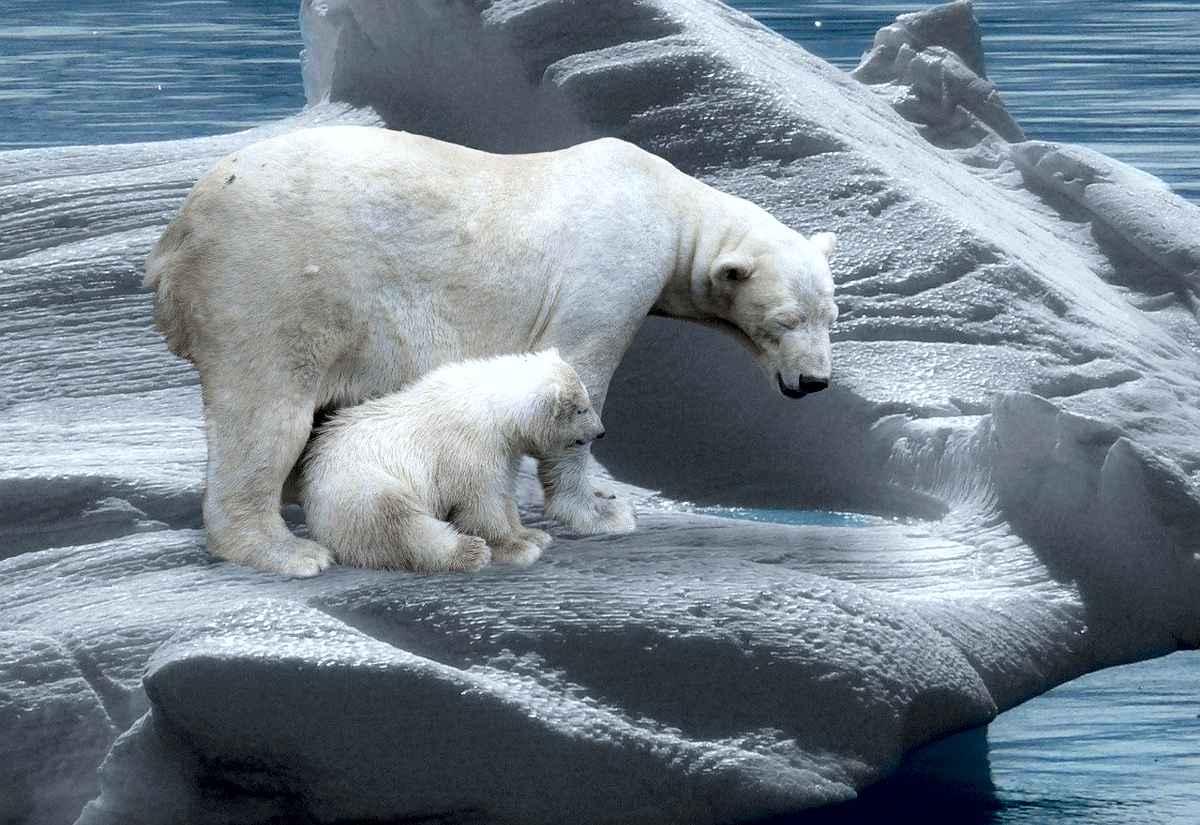 Topirea aisbergurilor este cheia secvenței unei Ere Glaciare