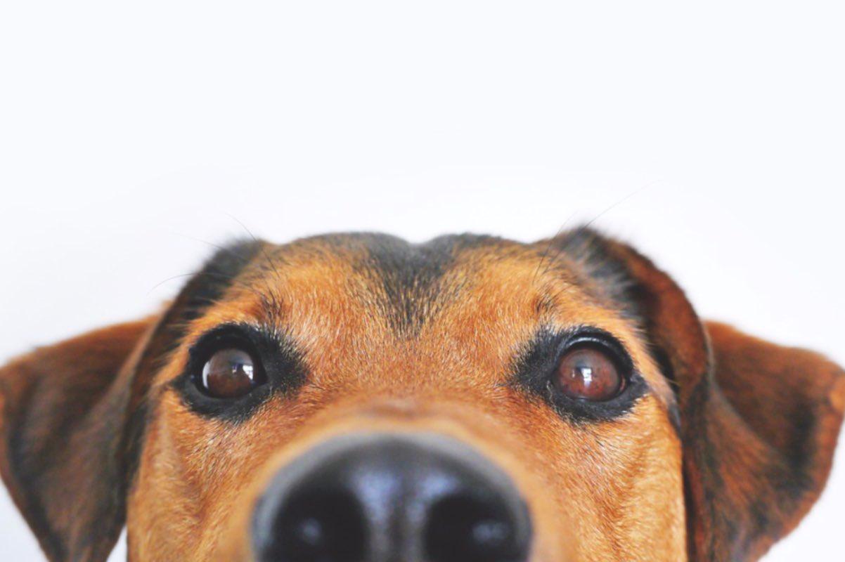 Nicuşor Dan anunță că a cerut ASPA să se ocupe de câinii din Adăpostul Odăi. Vezi de ce