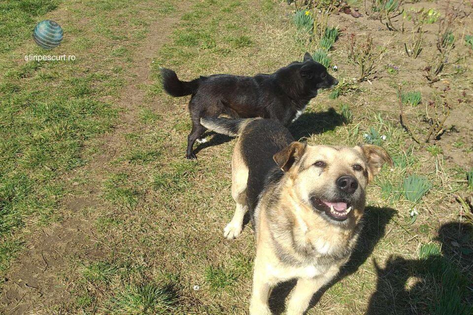 Anunț ANSVSA: Asociaţiile şi fundaţiile din domeniul protecţiei animalelor pot prelua lunar câini din adăposturile publice