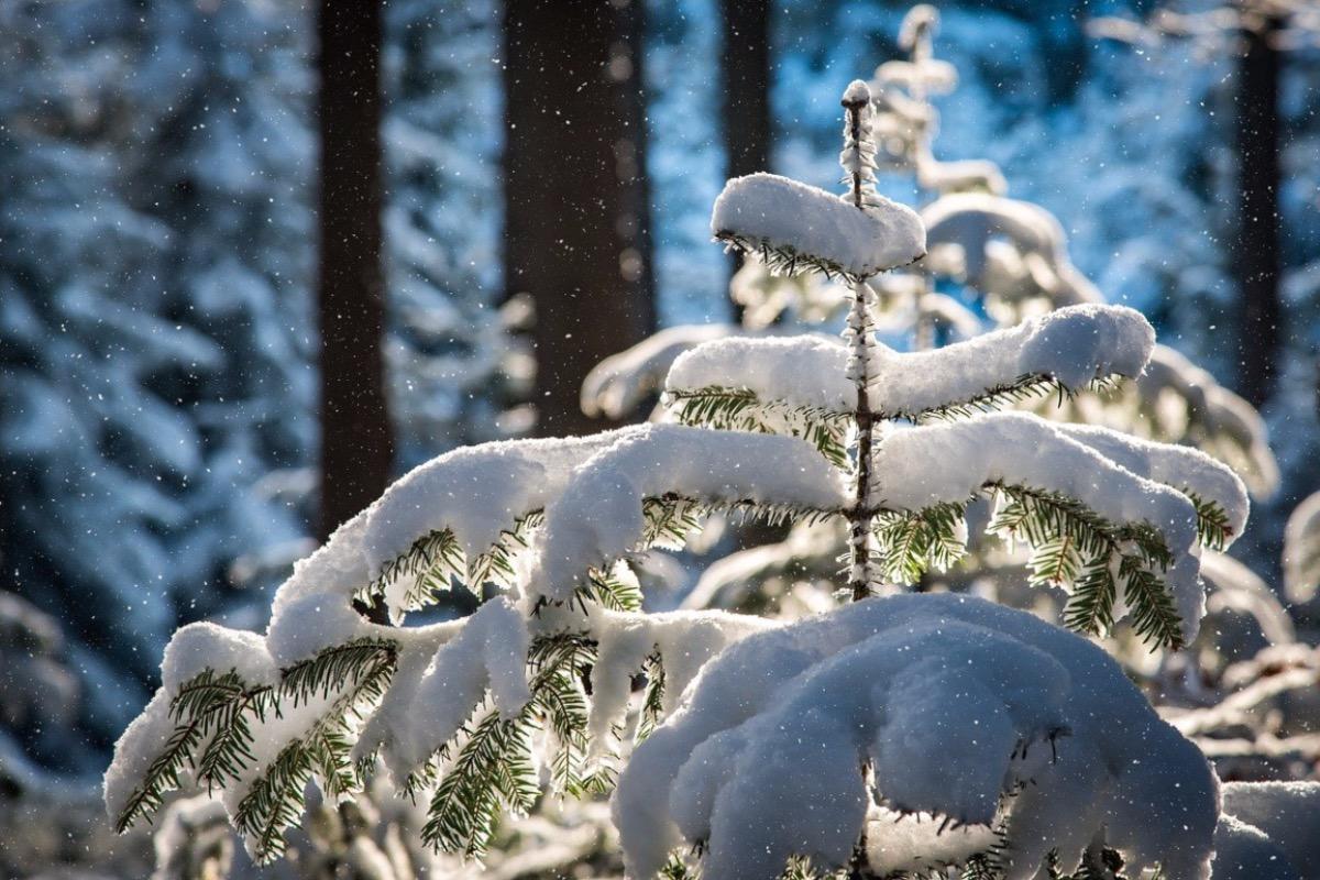 Alertă meteo de ninsori, lapoviță și ploaie