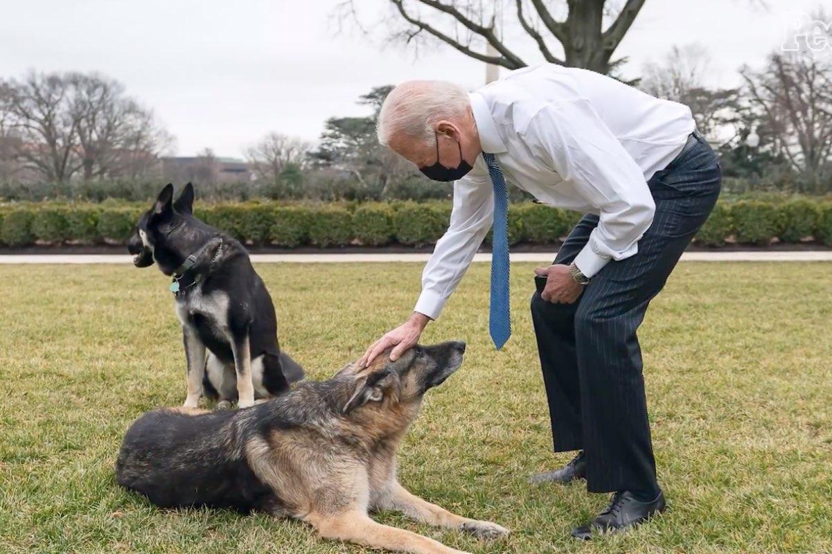 Biden și-a trimis câinii în Delaware, după ce un agent de securitate a fost mușcat