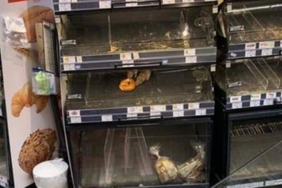 Magazinul Mega Image, din Capitală, unde șobolanii se hrăneau, din vitrină, cu produse de patiserie, amendat cu 10000 de lei de ANSVSA