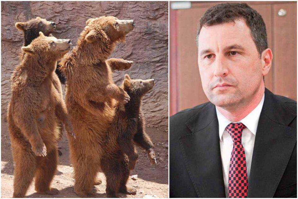 """Ministrului Mediului pregătește masacrul urșilor din România: Vrea împușcarea urșilor """"agresivi"""" în 24 de ore"""