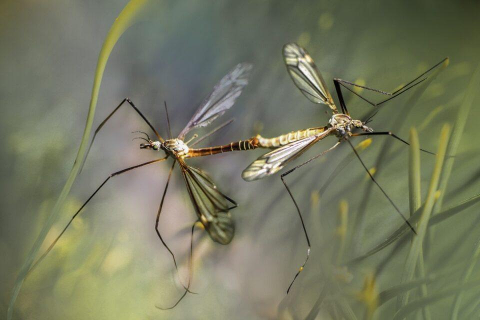 Adio țânțari și căpușe! Nicușor Dan anunță că a fost aprobat Planul de intervenție pentru deratizare și dezinsecție